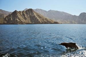 Delfine begleiten die Dhau
