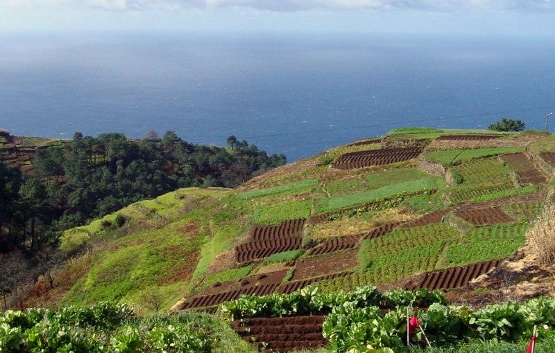 Landausflüge auf Madeira