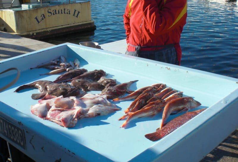 Fischmarkt am Vieux Port