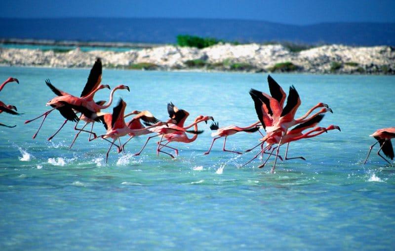 Landausflüge auf Bonaire zu den freilebenden Flamingos