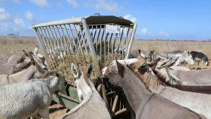 Im Esel-Schutzgebiet