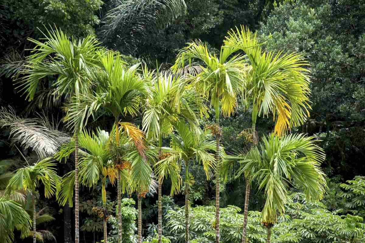 Martinique auf eigene Faust