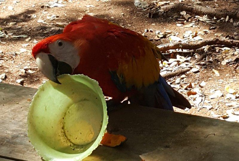 Landausflüge auf Roatan zum Mayan Eden Eco Park