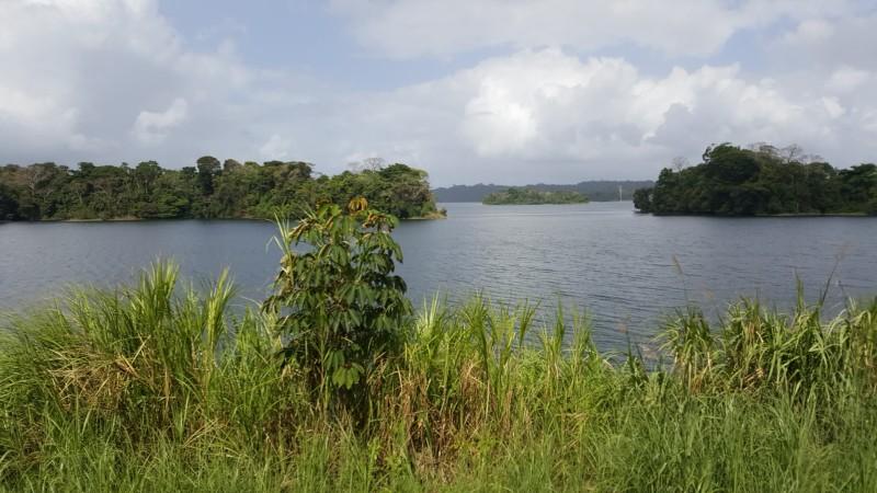 Natur am Panamakanal