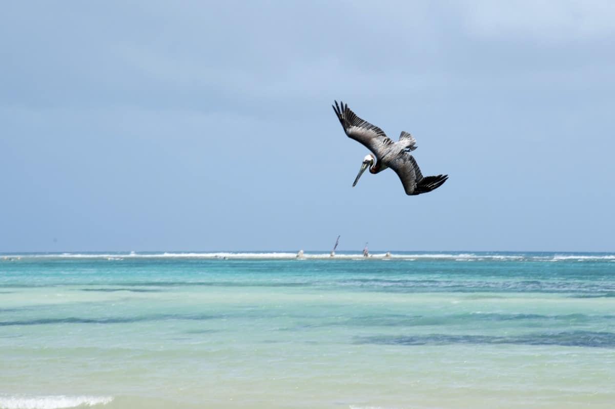 Guadeloupe Landausflüge