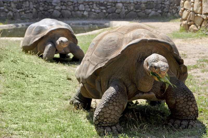 Schildkrötenpark A Cupulatta bei Vero