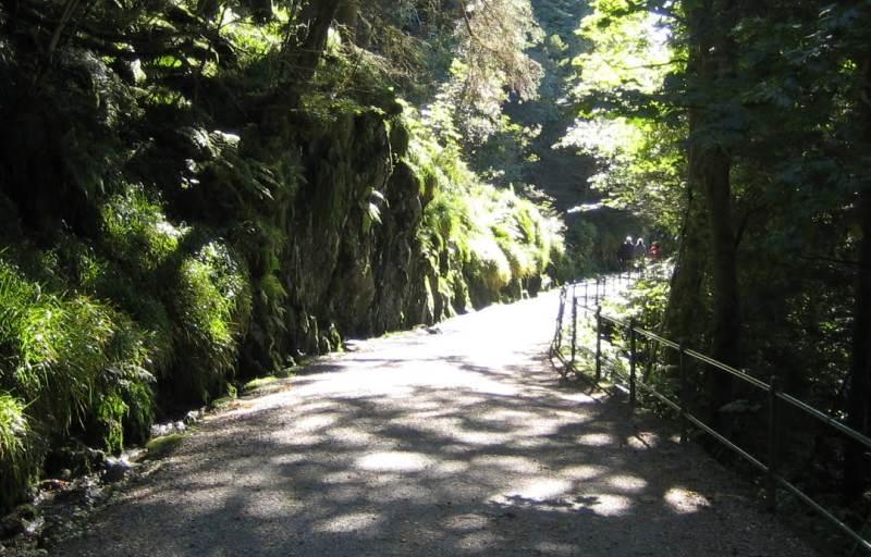 Der gut ausgebaute Wanderweg führt auf den Fløyen